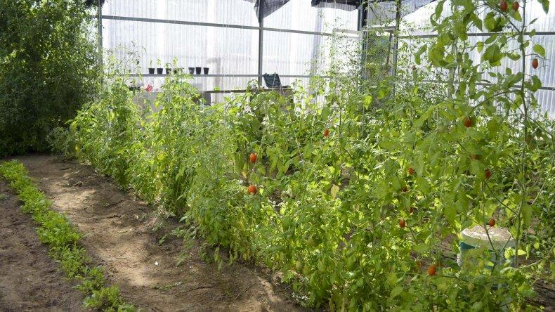 El Centro de Agroalimentos que se encuentra en el predio de Comodoro Conocimiento