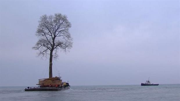 El enorme árbol que nada por el Mar Negro