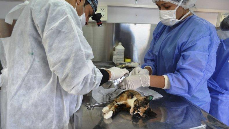 Castraron 80 perros y gatos en la campaña  de esterilización realizada en La Floresta