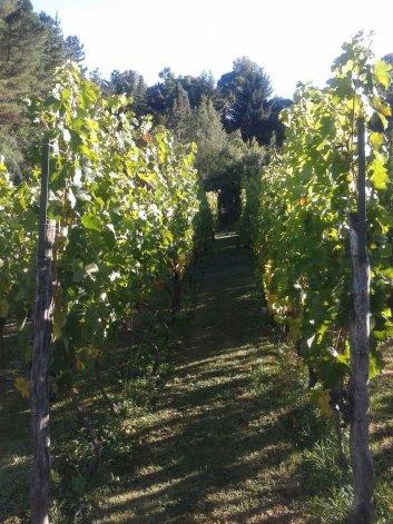 El recorrido por los proyectos vitivinícolas fue realizado por autoridades de la Subsecretaría de Ganadería y Agricultura de Chubut y del Instituto Nacional de Tecnología Agropecuaria.