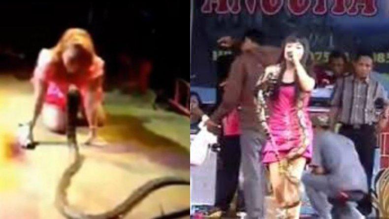 Murió una cantante al ser mordida por una cobra en su propio show
