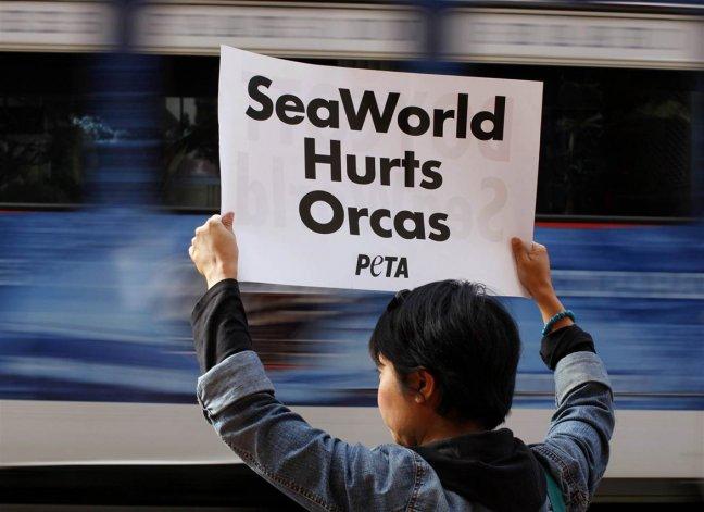 Ecologistas reclaman desde hace tiempo que los espectáculos con animales sean prohibidos y que los mismos sean liberados.