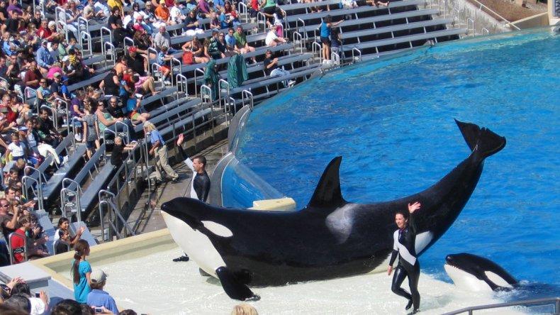 Los parques temáticos se caracterizaron por brindar espectáculos con animales marinos entrenados para realizar diferentes acrobacias.