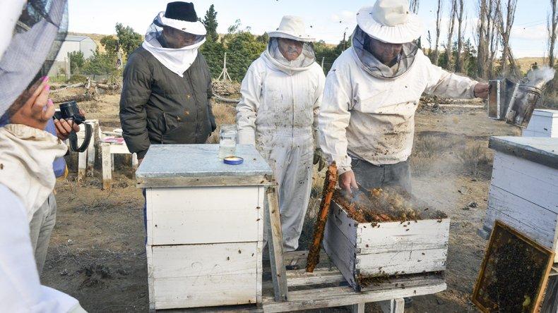Abejas en el viento: una veintena de productores impulsan la apicultura  en Comodoro Rivadavia