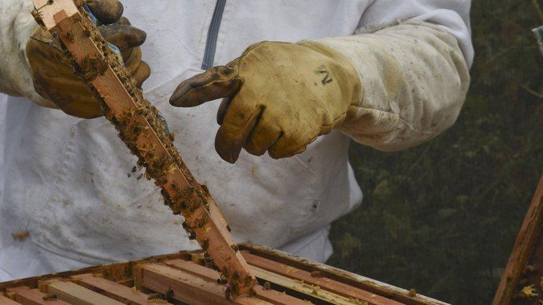 Hugo Valente tiene 28 colmenas