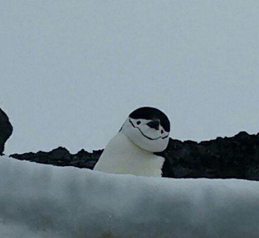 La vida bajo cero en la Base Antártica Orcadas integrada por 16 argentinos