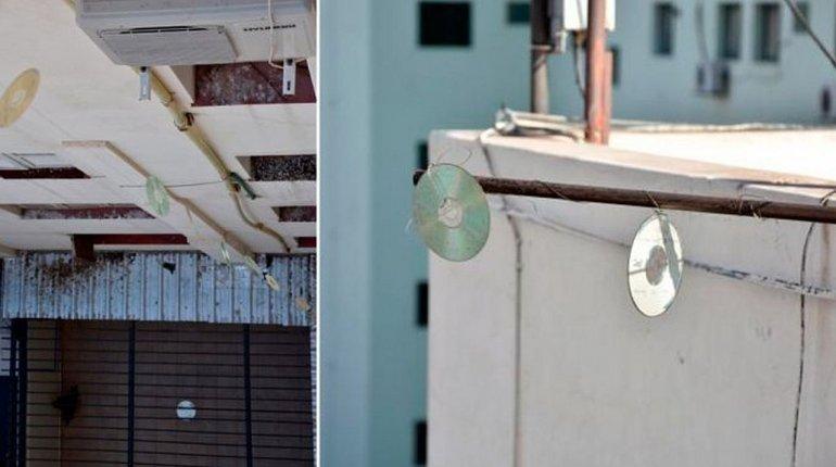 Utilizan cd´s para espantar a las palomas de un edificio