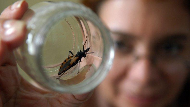 Chagas: se tardarían 300 años en tratar a todos  los pacientes del mundo