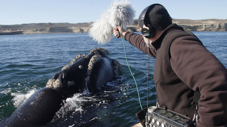 De Chubut a España: continúa la filmación de El faro de las orcas