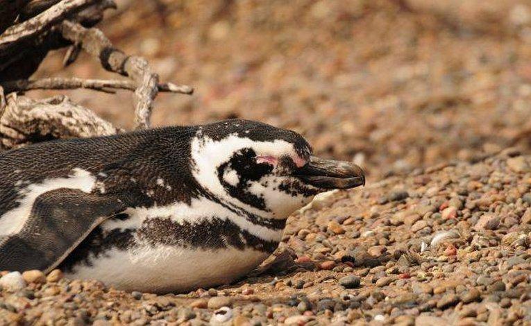 ¡Hoy es el Día Mundial del Pingüino!