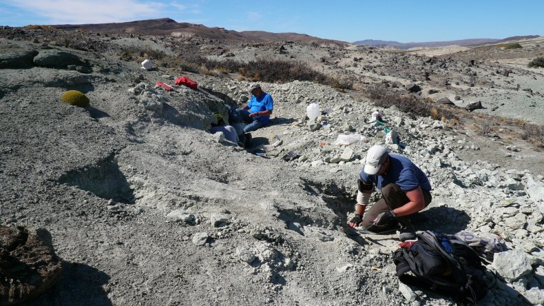El trabajo de los científicos en el lugar donde se hallaron los restos.