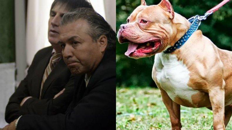 Sigue libre el dueño del pitbull condenado por la muerte de un nene
