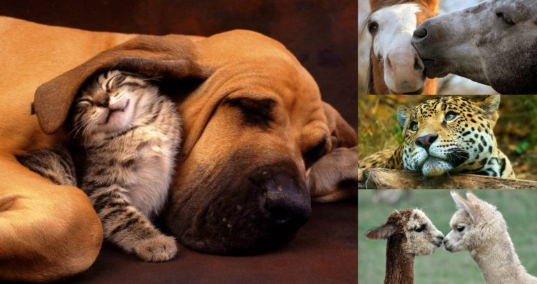 ¿Por qué se celebra hoy el Día del Animal?