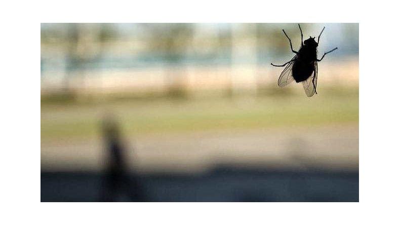 La mosca en la poesía y la bacteria en el vaso ajeno