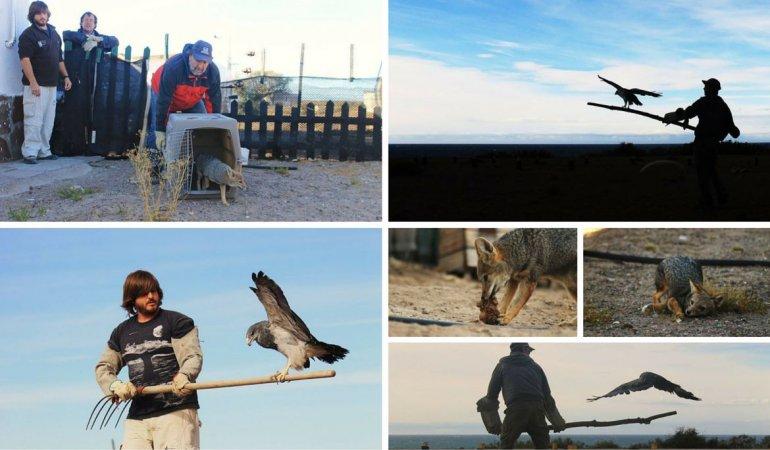 Rehabilitan y liberan animales del Zoológico de Rawson