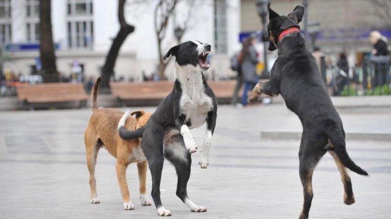 Reclaman un servicio eficiente para paliar la problemática canina