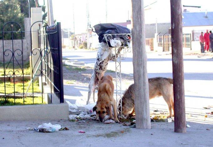 La presencia de perros sueltos en las calles genera un problema social.