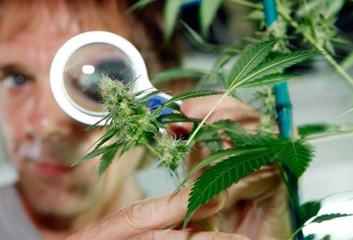 Marchan por la despenalización del consumo y tenencia de la marihuana