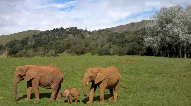 El espectáculo del Parque de la Naturaleza no sólo está en los animales
