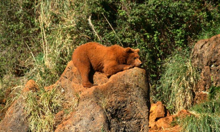 El Parque de la Naturaleza de Cabárceno muestra la cara más amable del hombre con la naturaleza.