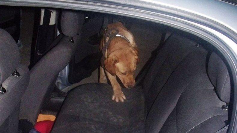 El cargamento de marihuana estaba escondido debajo del asiento trasero del auto.
