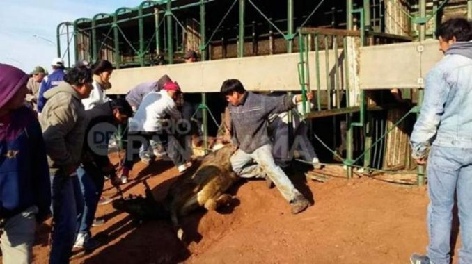 Volcó un camión con vacas: vecinos faenaron más de 20 animales
