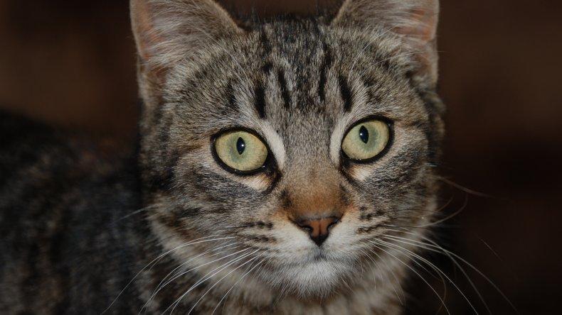 En Sarmiento analizan el curioso  caso de hidatidosis en una gata