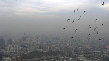 Recomiendan evitar el contacto con aves en Chile por la gripe aviar
