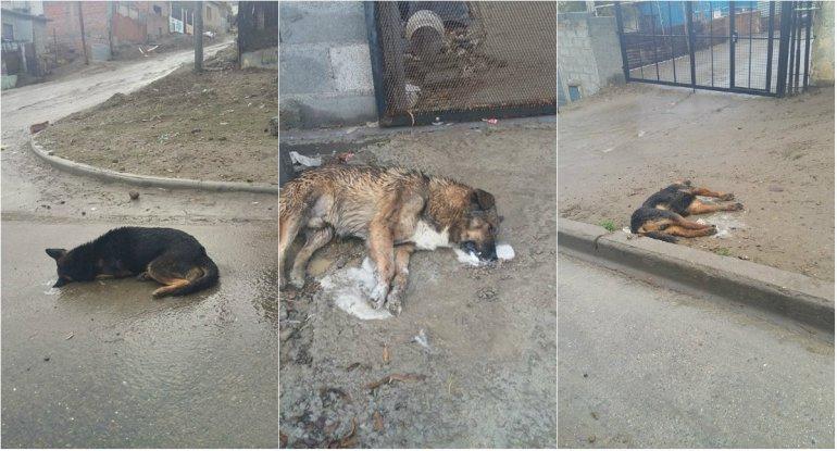 Siete perros fueron envenenados en el barrio San Martín
