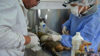 castraron a 120 animales en el stella maris