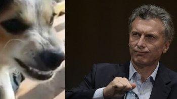 el perro que odia a macri es viral