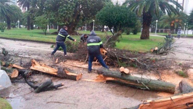 En Mar del Plata suspendieron las clases porque el viento llegó a 80 Km/h