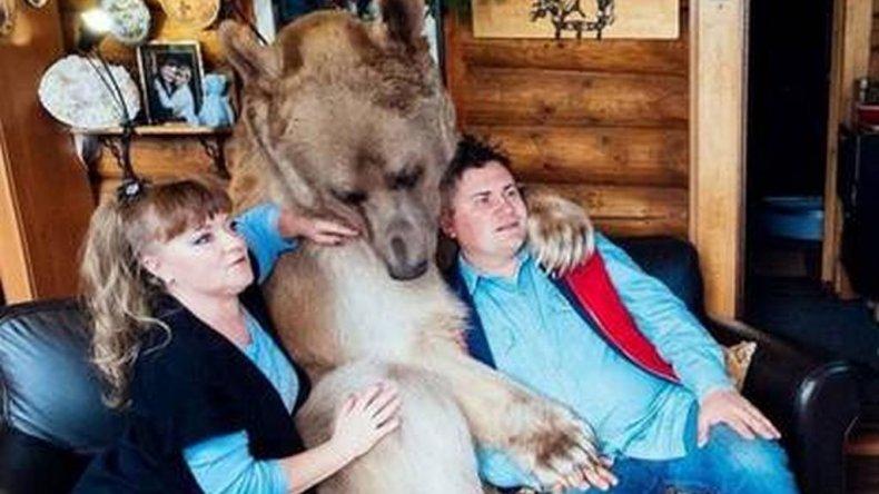 Tienen como mascota un oso de 135 kilos