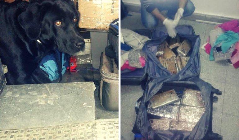 El perro Alexis detectó 20 kilos de marihuana que iban a Río Gallegos