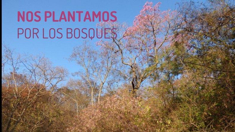 Conmemoran el Día Mundial del Medio Ambiente pidiendo por la Ley de Bosques
