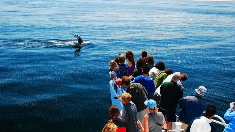 Península Valdés, uno de los 10 mejores lugares del mundo para ver ballenas