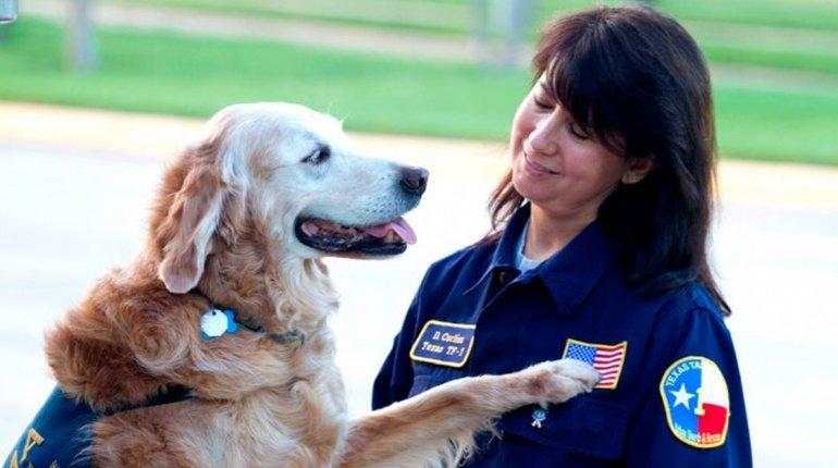 Murió la perra heroína del atentado a las Torres Gemelas