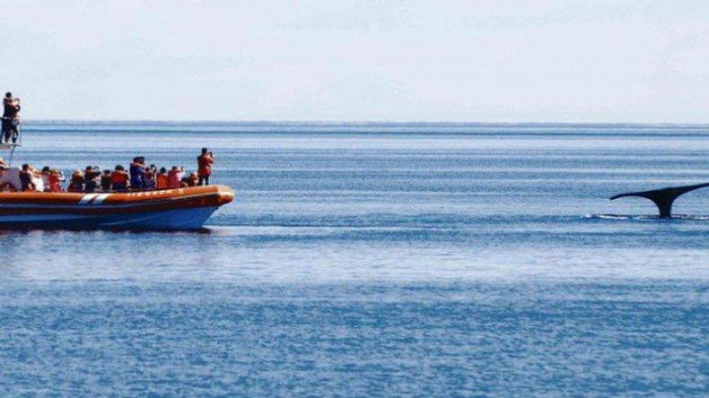Quedó inaugurada la temporada de ballenas en Puerto Pirámides