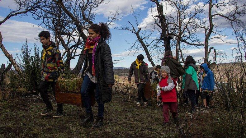 Niños y jóvenes plantaron cipreses en los bosques quemados de Cholila