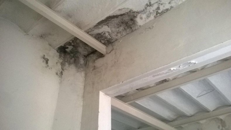 Alquila, se le cayó el techo encima de su hijo y el dueño quiere que pague por el arreglo