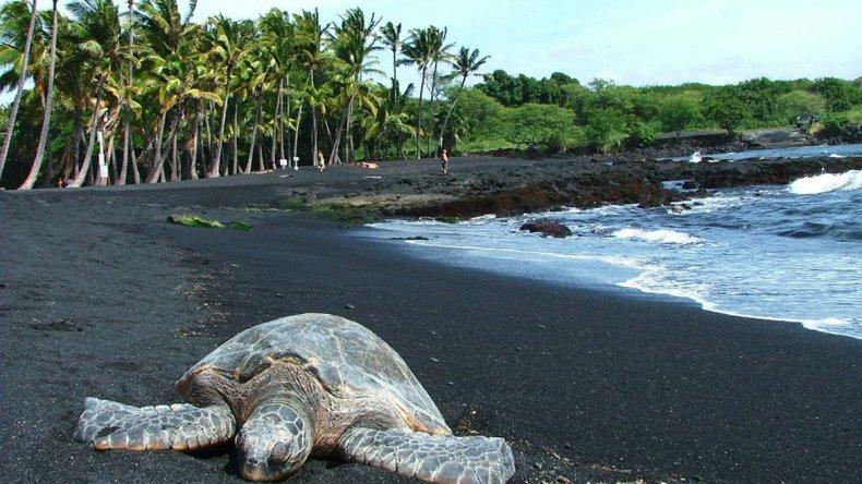 Las playas de arena negra suelen ser el hogar de las tortugas marinas.