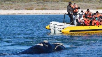 especialistas aseguran que disminuyo la poblacion de ballenas