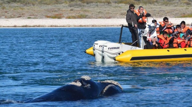 En agosto arranca el avistaje de ballenas en Río Negro