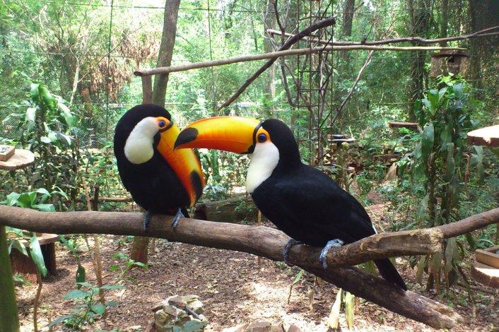 La reserva no sólo es un punto turístico sino que ayuda a la recuperación de muchos animales comercializados en el mercado negro