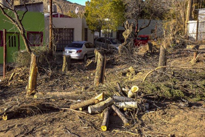 El vivero Mangou quedó devastado por el trabajo de las máquinas viales que prepararon el terreno para la ampliación de la calle.