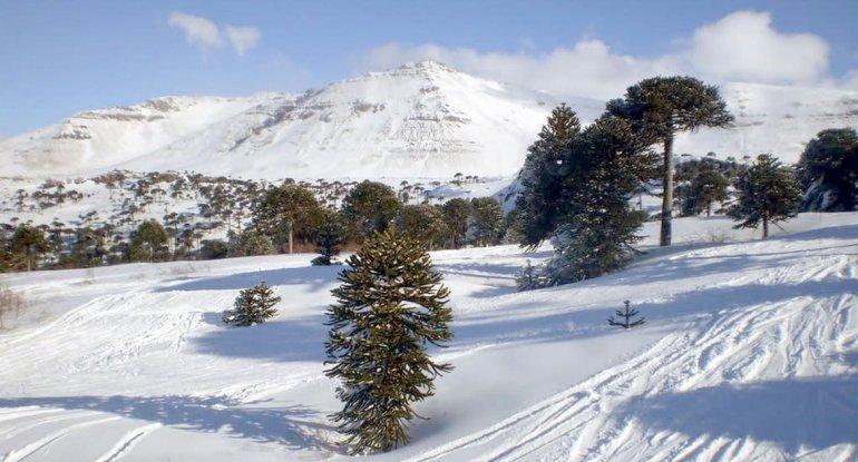 El volcán se encuentra a 2.958 m.s.n.m en la frontera entre Argentina y Chile.