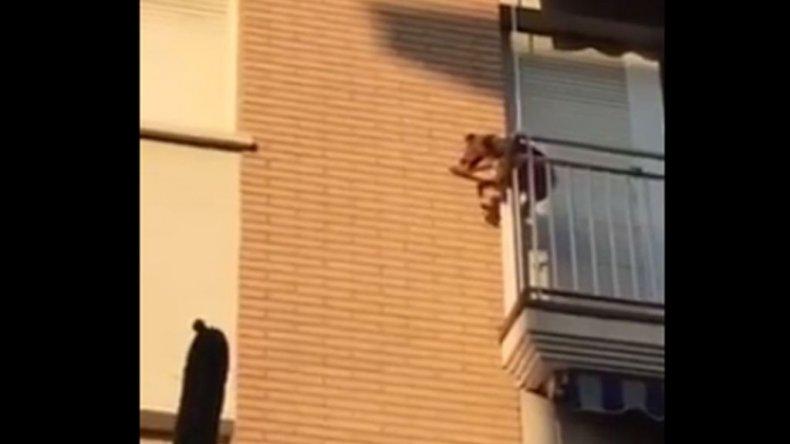 Un perro se tiró de un balcón: estaba encerrado y sin agua