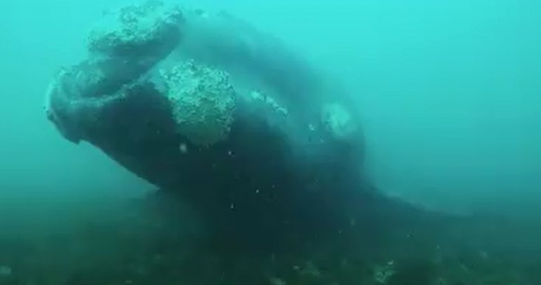 El video de un espectacular encuentro submarino
