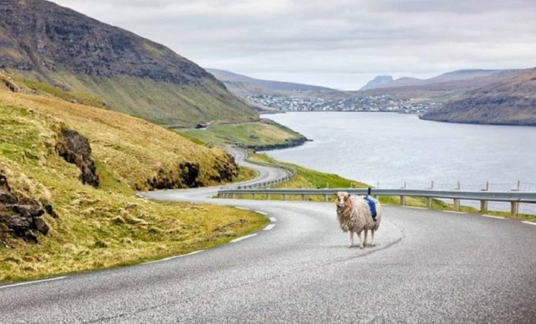 Una oveja filma imponentes paisajes en 360°
