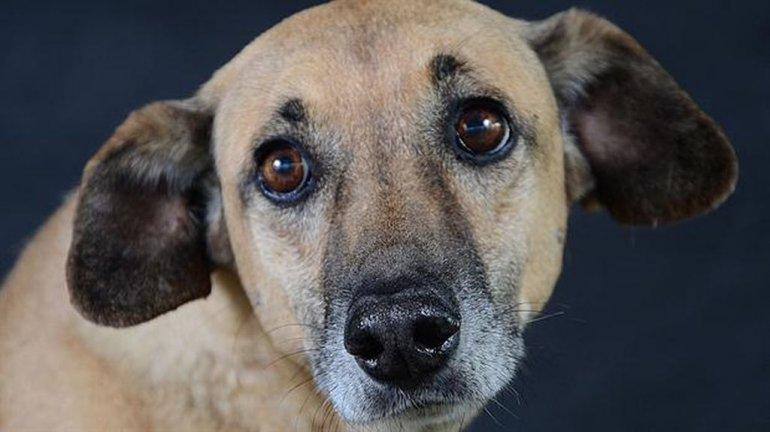 La tierna mirada de los perros de la calle en fotos